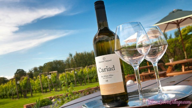 Bottle of wine and glasses Llanerch Vineyard Near Hensol Vale of Glamorgan South Tourist Attractions Photo credit VisitWales.com