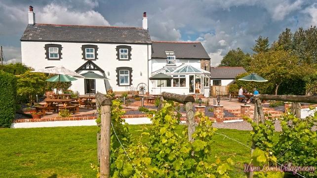 Llanerch Vineyard Near Hensol Vale of Glamorgan South Tourist Attractions