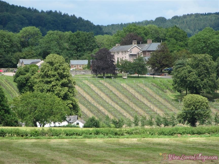 Wales Ancre Hill Vineyard Photo: VisitWales.com