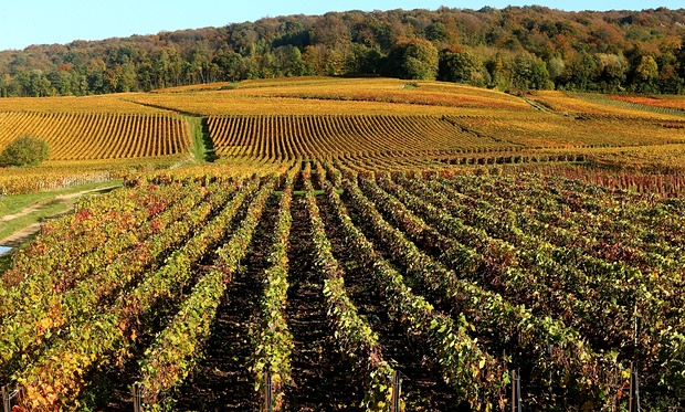 UNESCO World Heritage adds Champagne region of France to World Heritage List