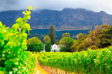 South-African-Wine-Quench
