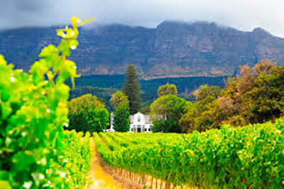 Food and Wine Travel To South Africa
