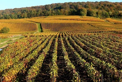 UNESCO World Heritage Adds Champagne Hillsides, Houses and Cellars