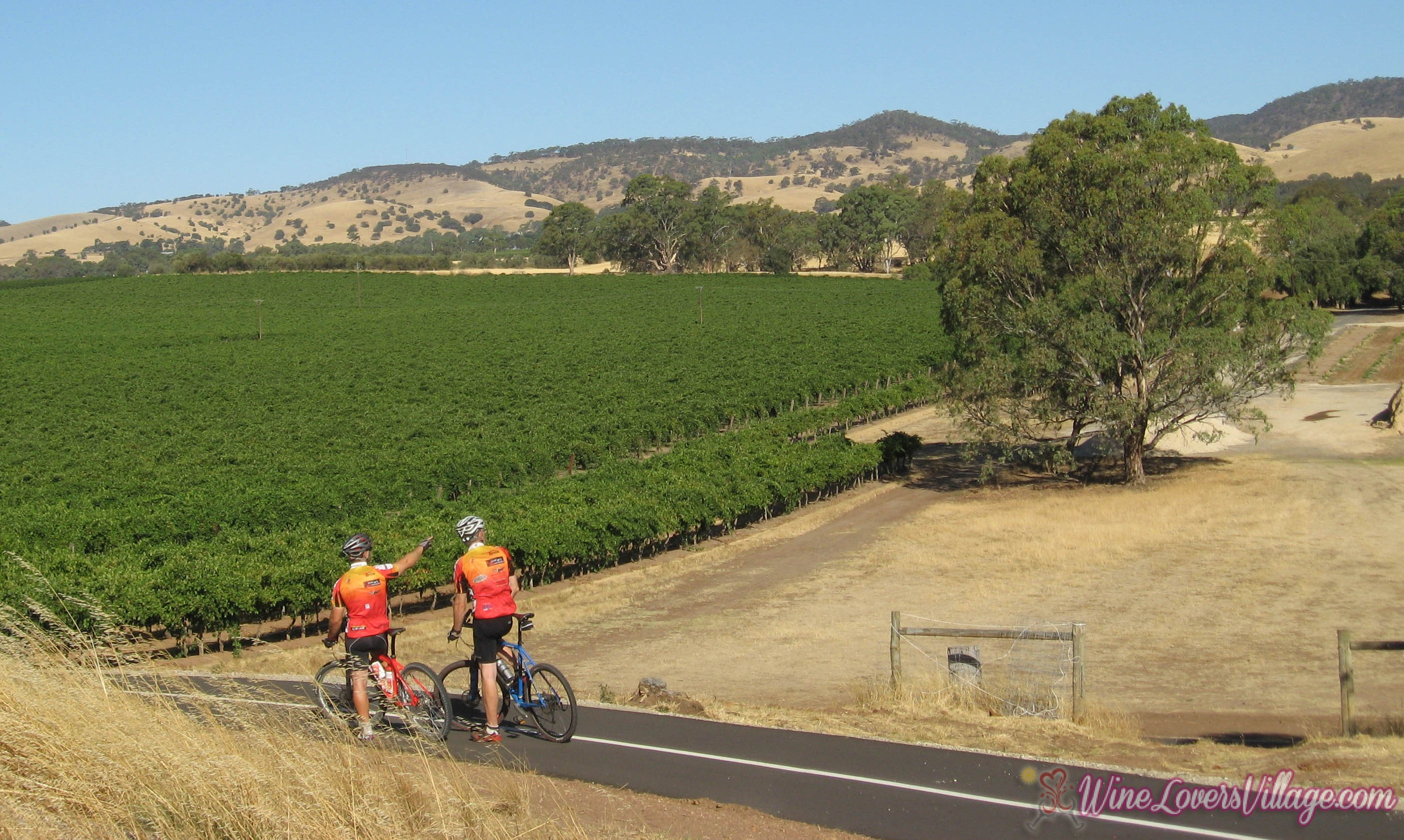 Cycling trails meet grape expectations in Australia's top wine region.