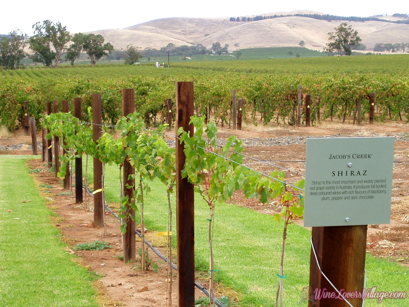 Australia's Wine Region: Barossa Valley Shiraz Photo Credit: Amanda Slater