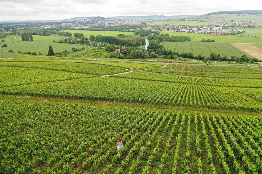 Take a Virtual Reality Tour of the Champagne Region of France. Photo credit: Osmany Tavares / CIVC